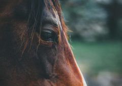 Equine sector asked to 'double down' on biosecurity measures