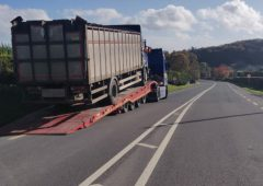 Livestock lorry seized at Garda checkpoint in Laois