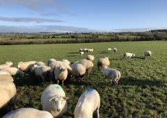 Sheep grassland management: Setting up the farm for next spring