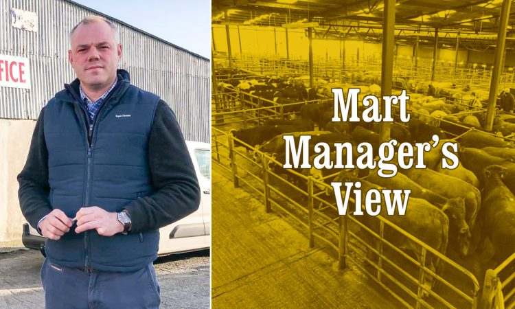 Video: Brian Hogan gives his views on the cattle trade at Athenry Mart