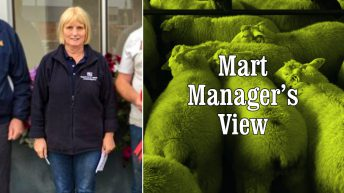 'Ewe lambs were the standout trade; heavy lambs made up to €115/head' – Maura Quigley