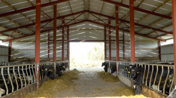 GrowthWatch: Rain forces stores indoors on heavy farms
