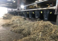 Beef focus: Operating a 50-head finishing enterprise and dairy farm in Co. Kilkenny