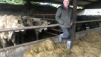 Beef Focus: Running a bull-beef finishing system alongside 500 breeding ewes