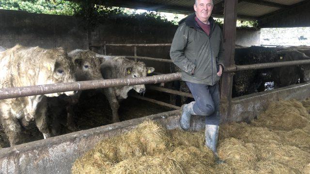 Beef Focus: Running a bull-beef finishing system alongside 500 breeding ewes