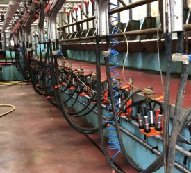 Controlling thermoduric bacteria on your farm