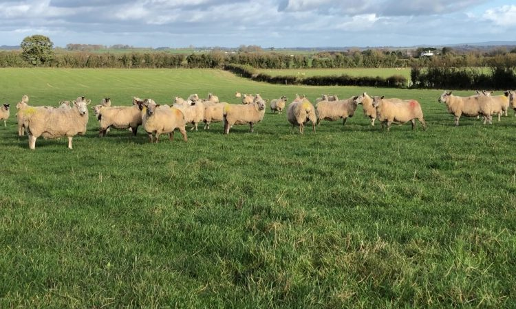 Sheep management: Continue to monitor the breeding flock closely