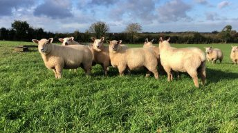 Lamb prices set to remain strong throughout the early months of 2021