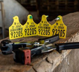DAFM:家畜溯源执法将改变