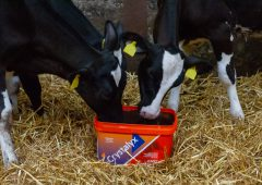 Pneumonia: Problems reaching epidemic proportions on many farms