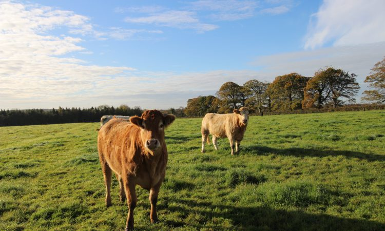 Video: 3 lots up for grabs on circa 97ac residential model farm