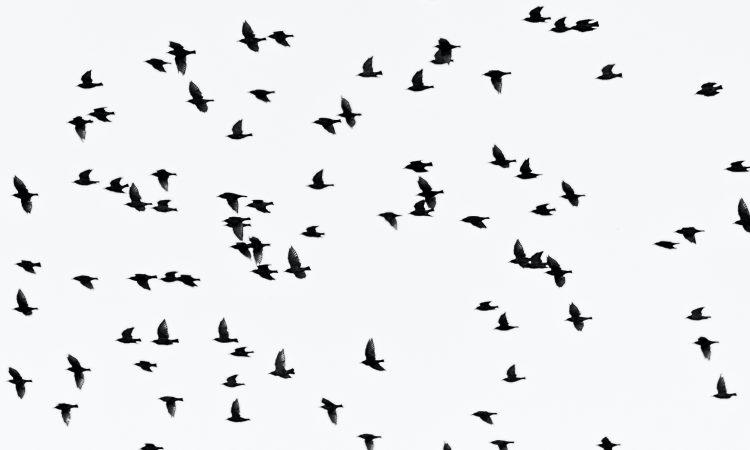 Bird flu discovered in wild bird in Limerick