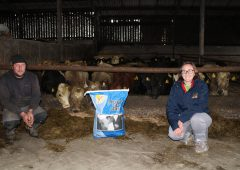 Shine Once-a-Day a bonus for labour and calf performance at Irish dairy farm