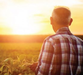 Farmers 'have a number of misunderstandings of UV sunlight risks'
