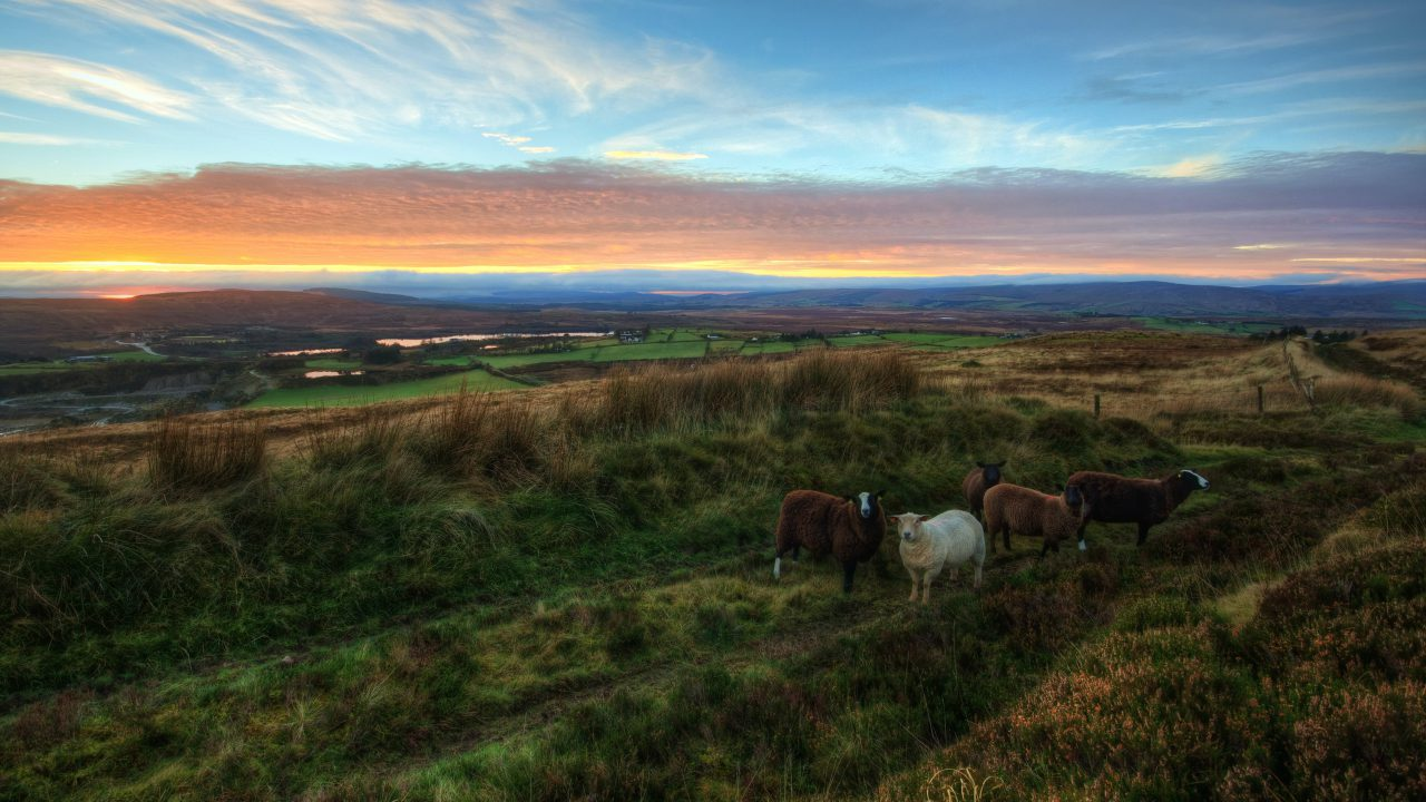 Additional €50 million in LEADER funding for rural communities announced