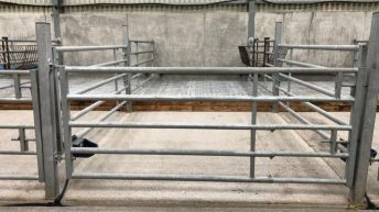Avoid using water when cleaning the calf shed