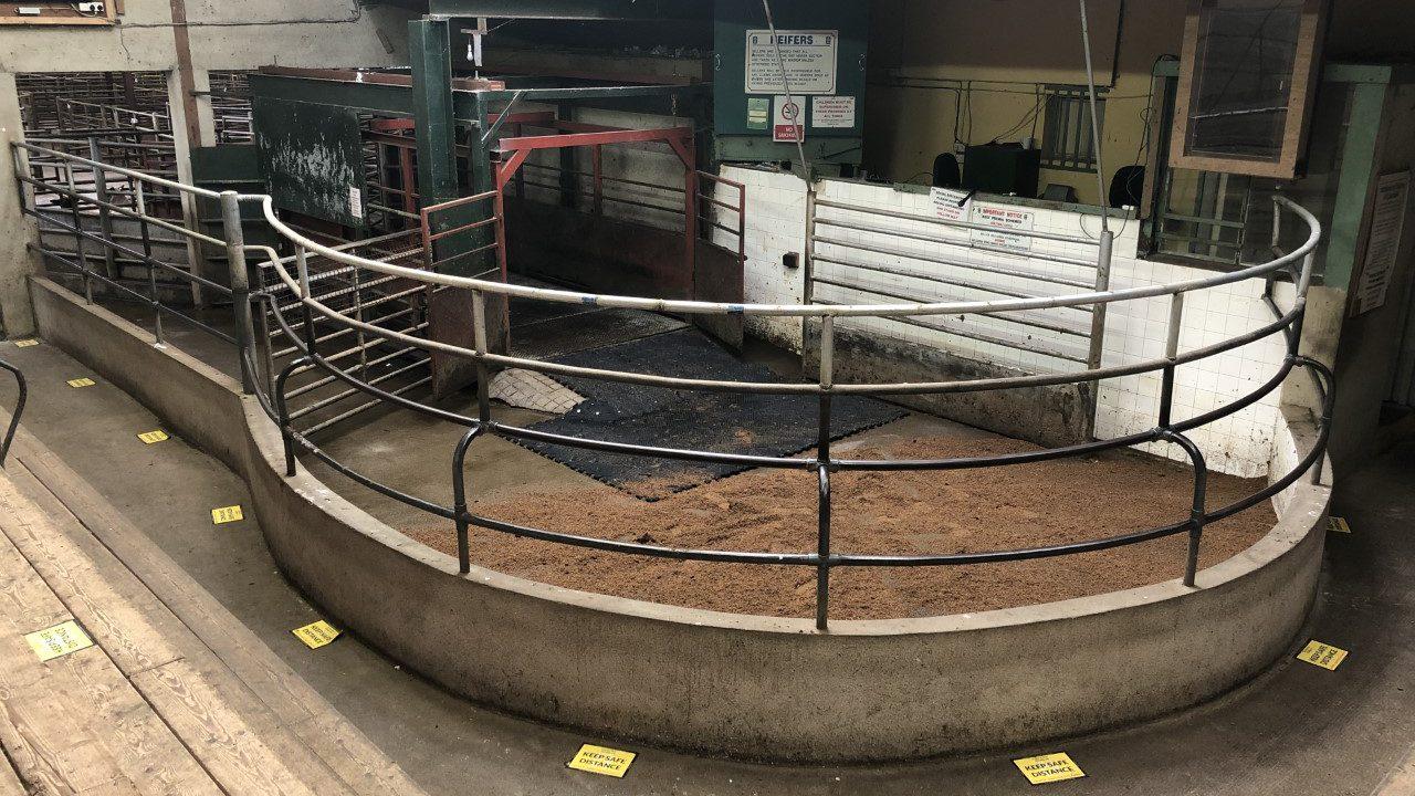 Marts update: Date set for buyers to return to rings