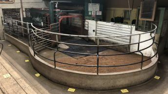Raphoe and Cork Marts cancel scheduled sales for this coming week