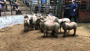 Sheep marts: Light stores an easier trade across many marts