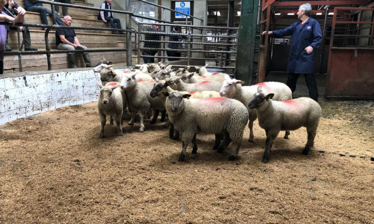 Prices: Heavy lambs hit €127/head at Enniscorthy Mart