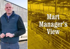 Ringside buying at mart could boost trade for lighter store cattle – Brian Hogan