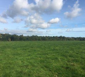 Bellewstown land parcels hit the market