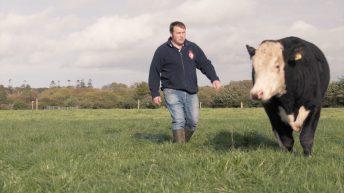 Irish Hereford Prime Farmer of the Year 2020 revealed