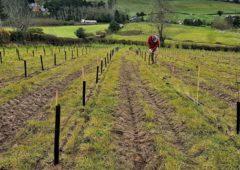 里昂敦促倪农民在时间耗尽之前进行种植