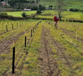 Northern Ireland's two woodland grant schemes reopen