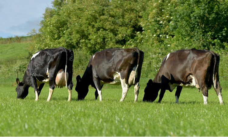 Dovea Genetics: Looking to the future in Ireland and abroad