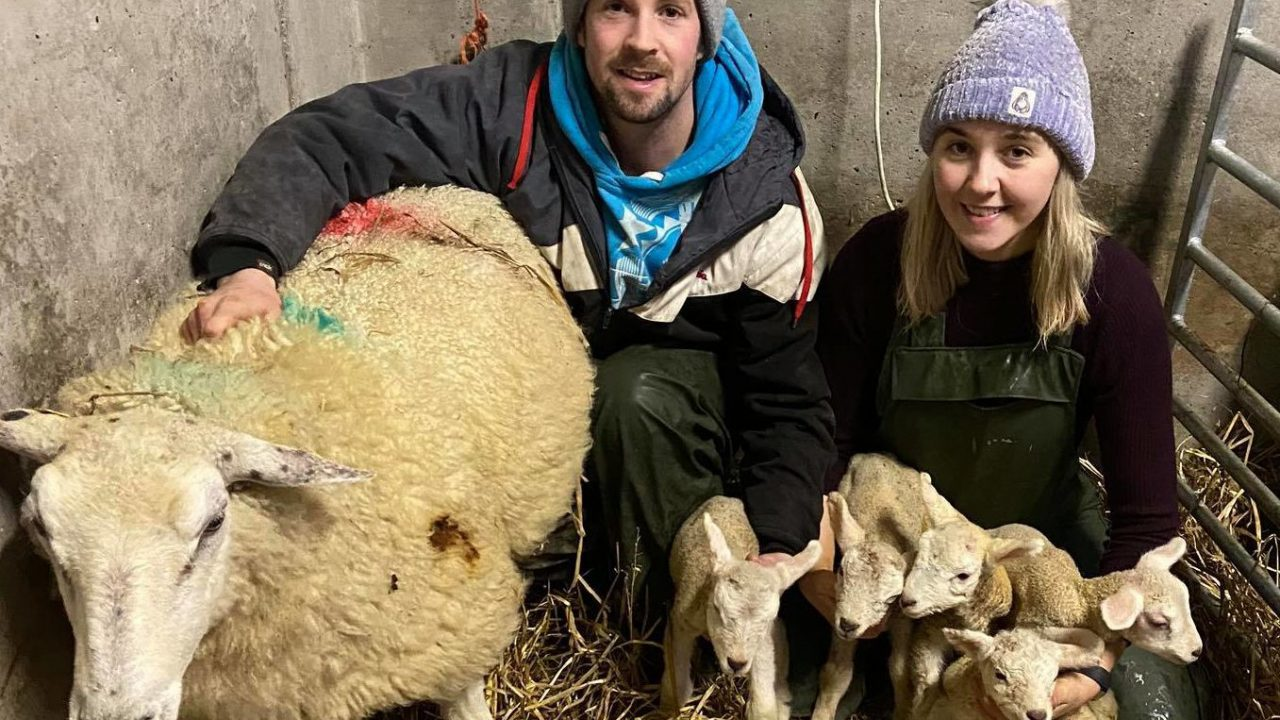 'We can't go on nights out so at least we can lamb sheep' – quintuplets on Donegal farm