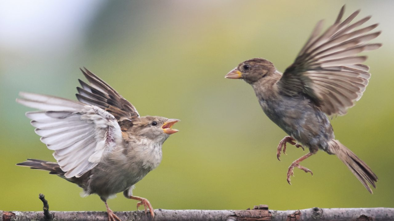 QUB theory suggests emotions underpin animal behaviour