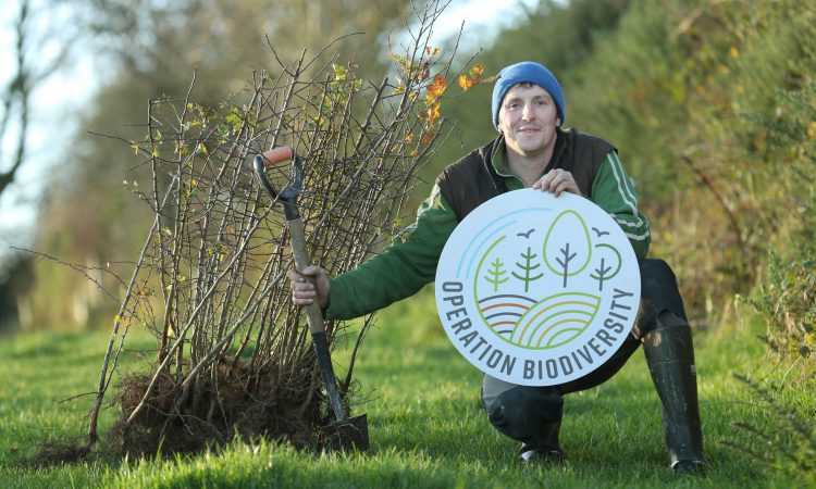 Glanbia launches initiative to increase the planting of trees and hedgerows