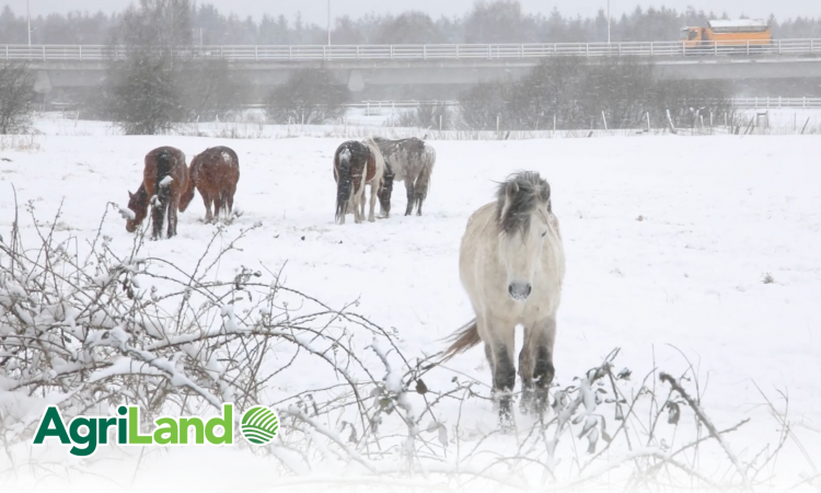 Happy Christmas and hope-filled new year from all at AgriLand
