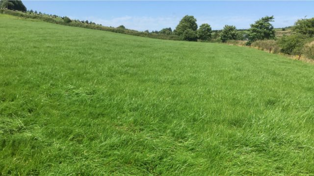 Growth Watch: Maximising graze-outs for April to enhance grass quality