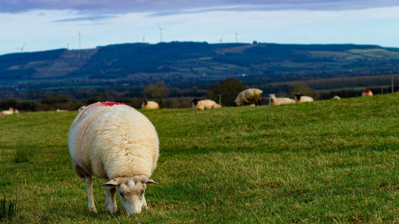 Deadline for sheep census fast approaching
