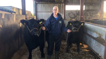 Beef Focus: 'The bull was good enough to sell in Scotland, so that's exactly what we did'