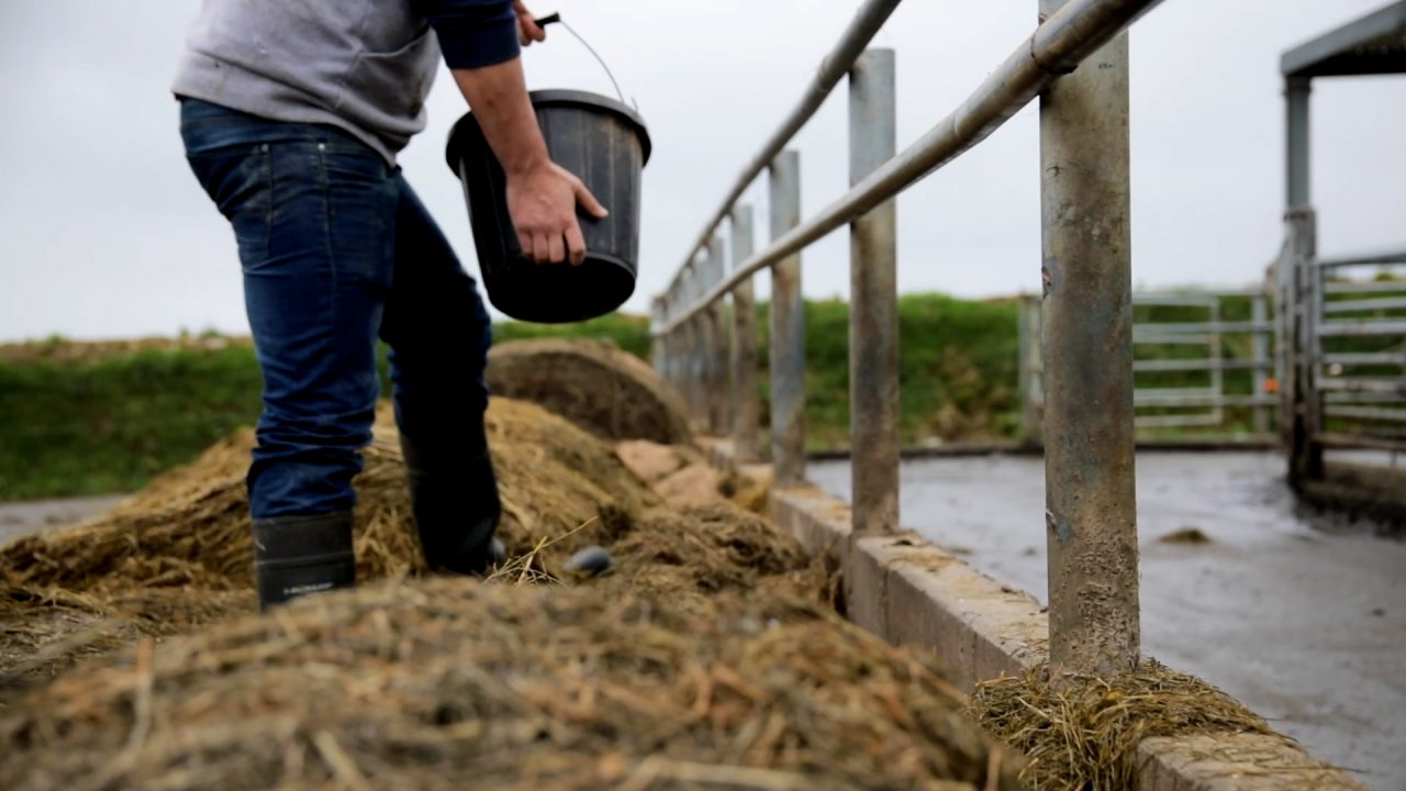 5 agri and equine apprenticeships proposed for development