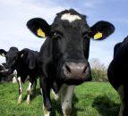 NI milk prices edge upwards for March
