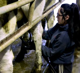 Using milk recording reports to identify problem cows