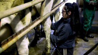 People management more important as national dairy herd grows