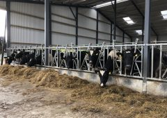 Preparing for a 'cold snap' on farms