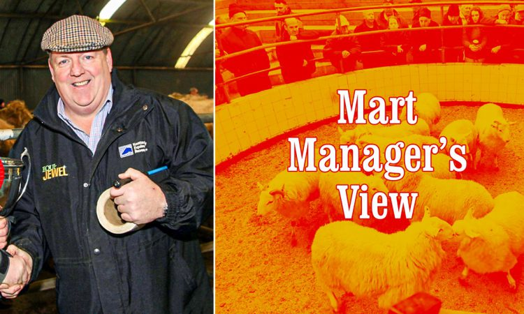 'The sheep trade has been unbelievable; I've seen stores making nearly €3.50/kg'