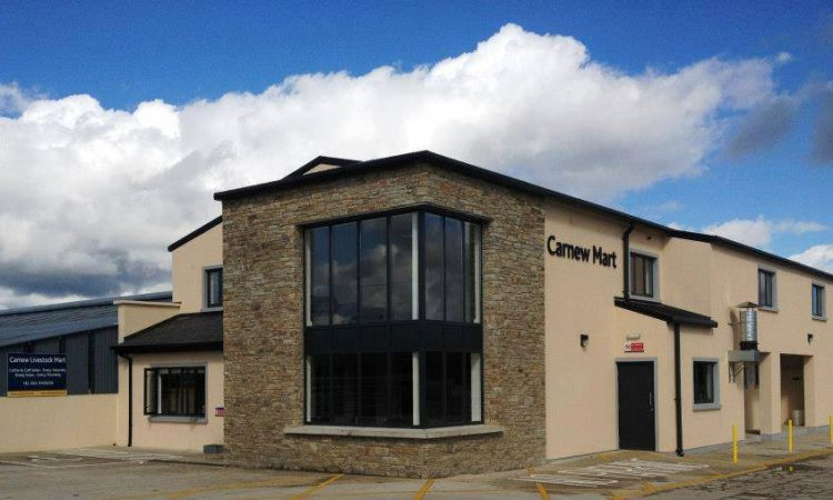 Record prices achieved at Carnew, as hoggets hit €163/head