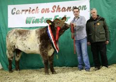Youngest ever president appointed to the Irish Shorthorn Society