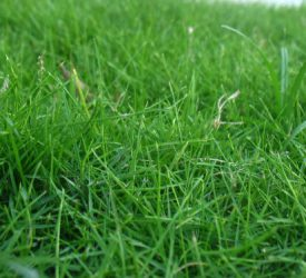 Considering reseeding? 5 steps for a successful reseed