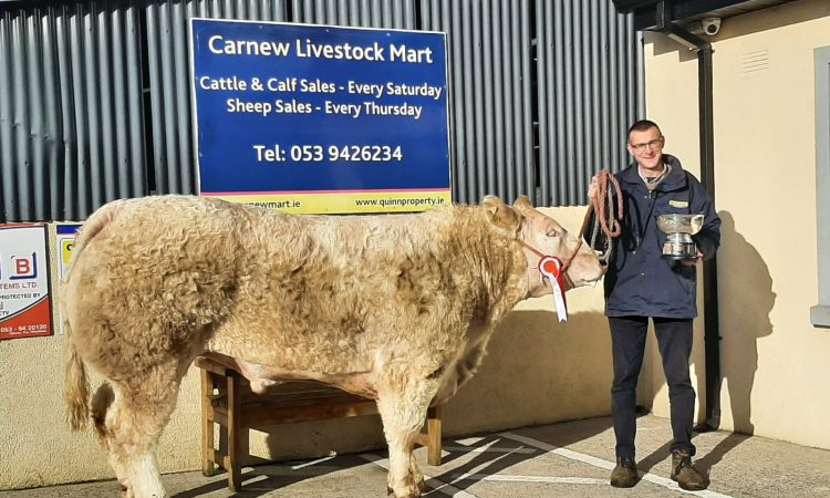 Bullocks sell up to €3,000 at special show and sale in Carnew Mart
