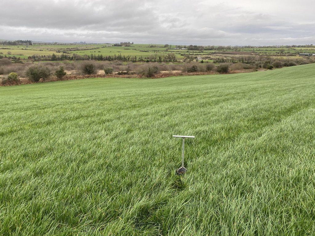 Green Acres, grazing season grass