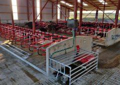 再次聚焦:在Laois公司全新的机器人挤奶系统中挤奶69头奶牛