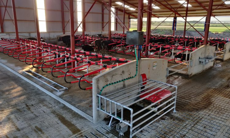 Back In Focus: Milking 69 cows in a brand new robotic-milking system in Co. Laois